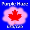 Purple Haze USDCAD